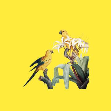 illustration of an bird