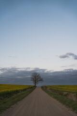 piaszczysta droga z drzewem na jej skraju