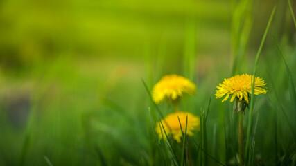 Obraz Wiosna, kwiaty. - fototapety do salonu