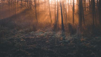 Promienie słońca przebijające się między drzewami