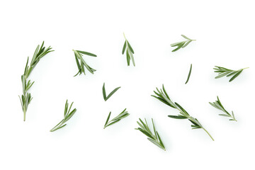 Obraz Fresh rosemary leaves isolated on white background - fototapety do salonu