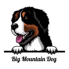 Obraz Big Mountain Dog - dog breed. Color image of a dogs head isolated on a white background - fototapety do salonu
