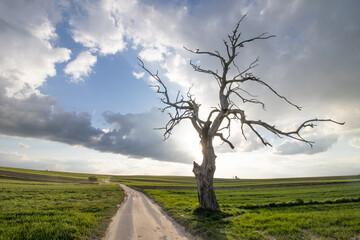 Fototapeta Zachód słońca na polach z drzewem obraz