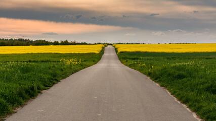 droga przez kwitnące pola rzepaku - fototapety na wymiar