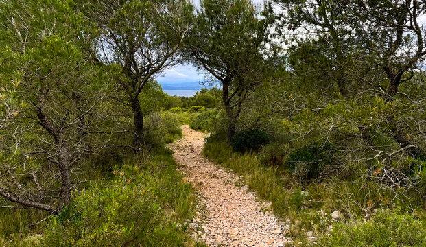 chemin dans la garrigue menant aux étangs et à la mer dans le Massif de la Clape