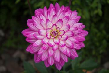 Obraz Różowy kwiat - fototapety do salonu