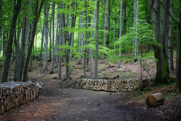 Wiosenny las - fototapety na wymiar