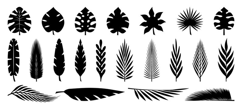 Set of tropical leaves silhouettes. Collection palm leaves. Jungle exotic leaves and botanical plants. Vector illustration.