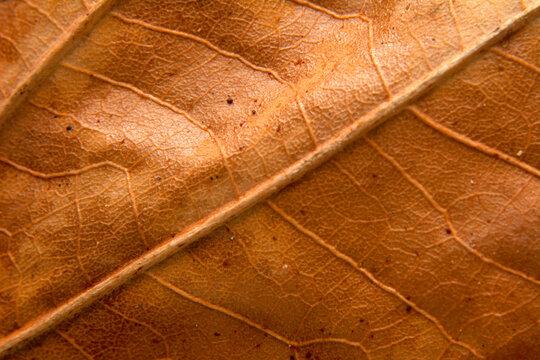 Autumn landscape. Frame dry leaf background.