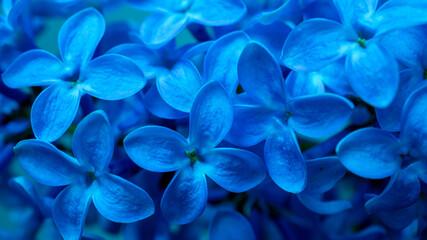 blue lilac flowers macro photo - fototapety na wymiar