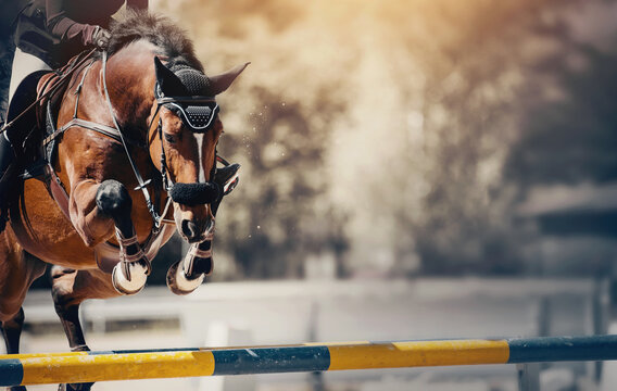 The bay horse overcomes an obstacle.Show jumping