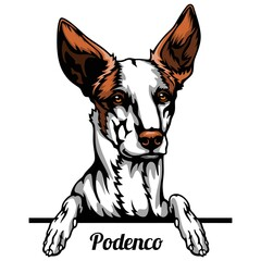 Obraz Podenco - dog breed. Color image of a dogs head isolated on a white background - fototapety do salonu
