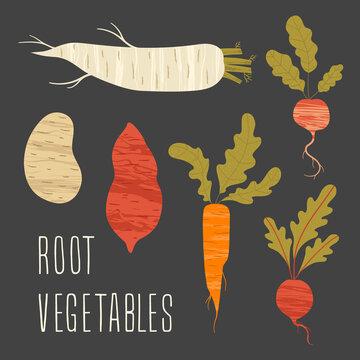 Set of vector root vegetables. Fresh organic food. Healthly food. Flat vector illustration.