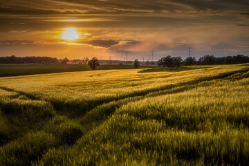 Fototapeta idylliczny zachód słońca nad polami zbóż późną wiosną obraz