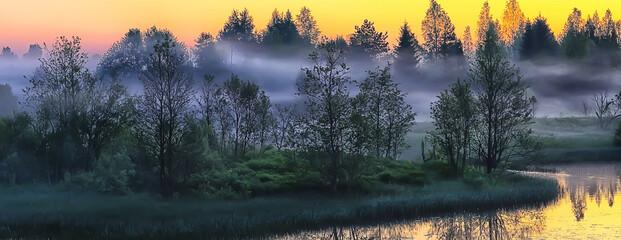 fog rainforest dawn, nature landscape trees