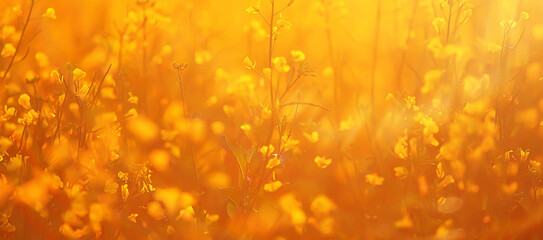 abstract summer background texture of yellow flowers in the field, beautiful nature sunny day wild flower - fototapety na wymiar