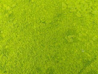 Moss on the water surface.