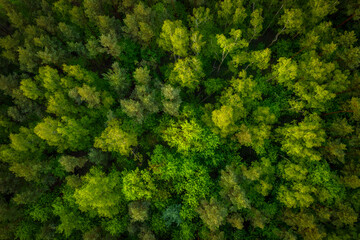 Aerial top view of the idyllic green forest in the summer. - fototapety na wymiar