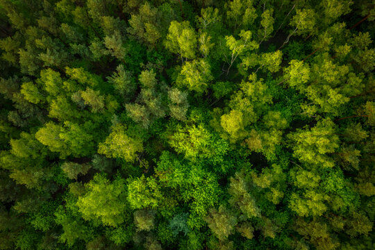 Aerial top view of the idyllic green forest in the summer.