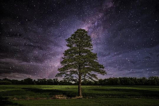 samotne drzewo w nocy pod drogą mleczną