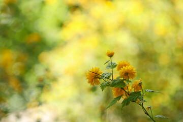 Fototapeta Kwitnący krzew obraz