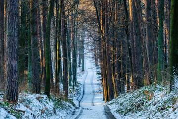 Ścieżka w lesie przysypana białym śniegiem
