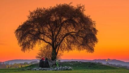 Pojedyncze drzewo a za nim zachodzące słońce. Drzewo wiosenne