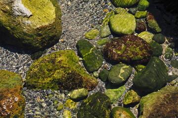Obraz Zielone kamienia w płytkiej morskie wodzie przy brzegu - fototapety do salonu