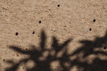 Fototapeta Ciemne jagody na ziemi i cień od drzewa obraz