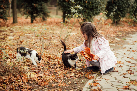 Young Girl Play With Cats Outdoors After The Covid-19 Quarantine Ended