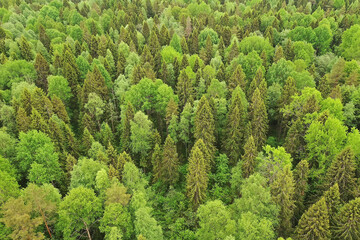 forest top view, landscape panorama view of summer forest with quadrocopter aerial view - fototapety na wymiar