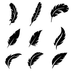 silhouette of birds feather
