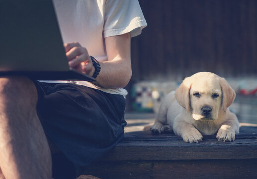 Cute labrador puppy sitting next to a young male owner working on a laptop