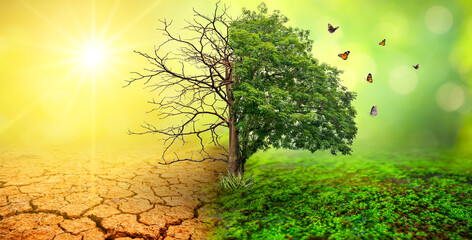 Fototapeta tree in two  with very different environments Earth Day or World Environment Day Global Warming and Pollution obraz