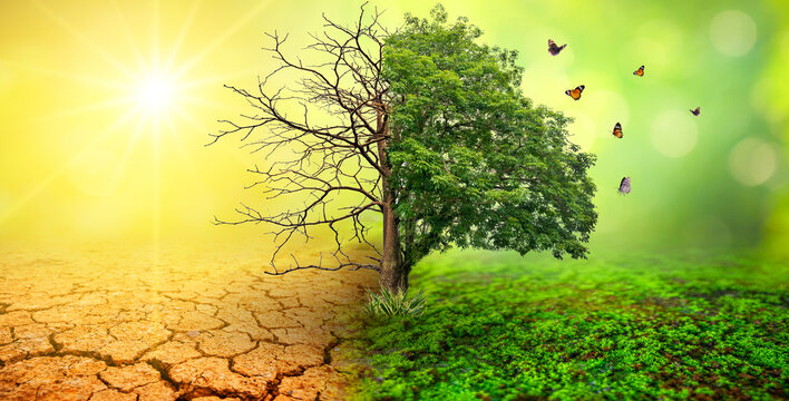 tree in two  with very different environments Earth Day or World Environment Day Global Warming and Pollution