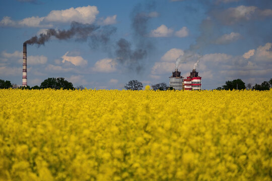 Blooming canola field on foreground and industrial pipes with smoke on background. Ecology concept