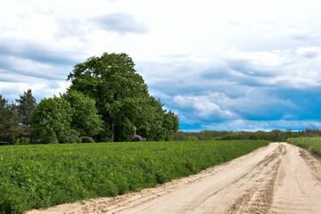 Polna droga, zielona trawa i drzewa.