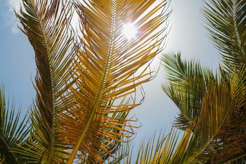 pomara艅czowo zielone li艣cie palm na tle b艂臋kitnego nieba os艂aniaj膮ce przed promieniami s艂o艅ca