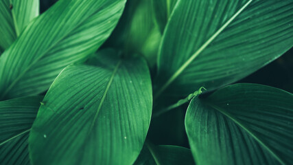 green leaf nature texture background, abstract pattern of tropical foliage plant in spring garden,...