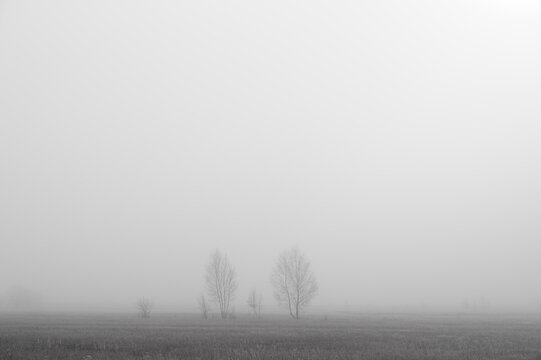 Trees in the mist behind a field. Minimal composition, monochrome image. Place for text