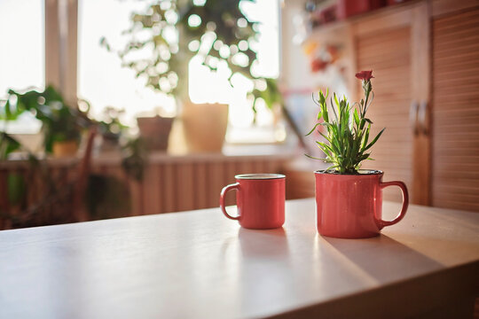 A cup with coffee and a mug with green blooming flower on the windowsill in the morning, home floral decor, home gardening and slow living concept, potted green plants at home
