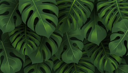 Tropical jungle Monstera leaves background.