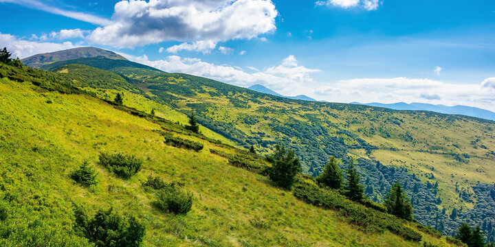 hills of the petros mountain in summer. wonderful nature scenery of carpathians on a sunny day
