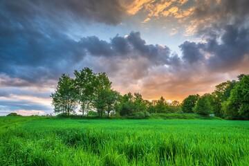 Drzewa na polach a w tle kolorowe rozświetlone słońcem chmury