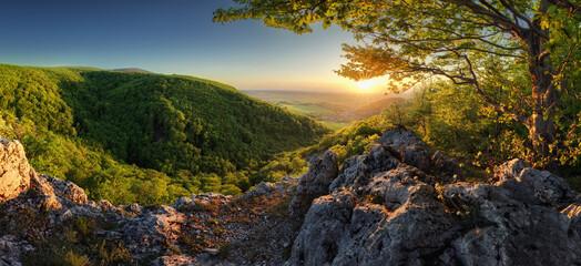 Panorama of spring with sun and tree, Slovakia