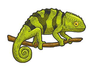 Obraz Chameleon lizard sketch raster illustration - fototapety do salonu