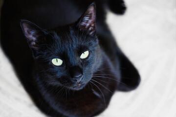 Obraz Czarny kot patrzący w obiektyw. Wyraźne zielonkawe oczy, rozmyte tło. - fototapety do salonu
