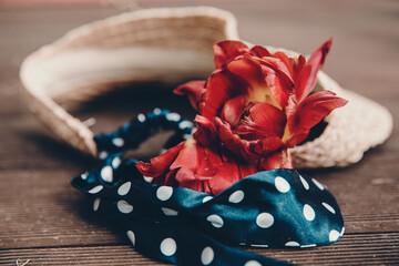 Obraz Czerwony kwiat. - fototapety do salonu