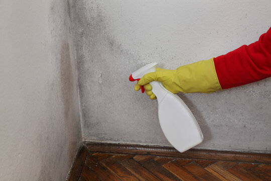 Mold removal in home, worker spraying cleaning solution from bottle to wall, closeup of hand in protective glove holding sprayer