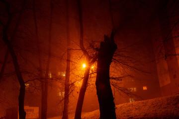 park noca  - fototapety na wymiar